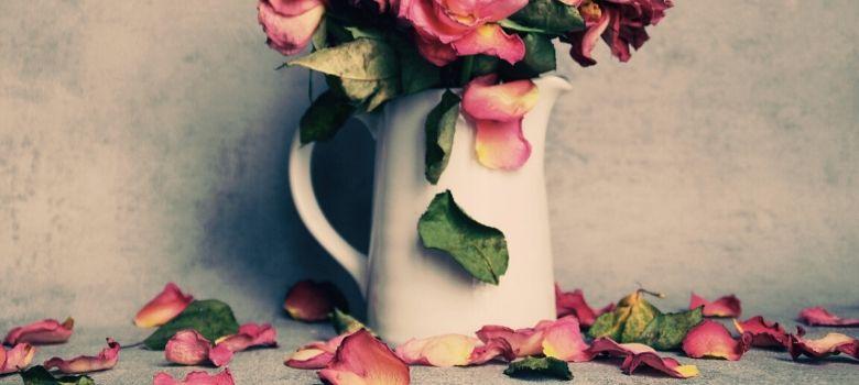 verwelkte Rosen in einer Porzellanmilchkanne